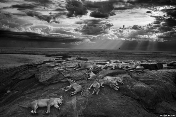 Slumbering Lions